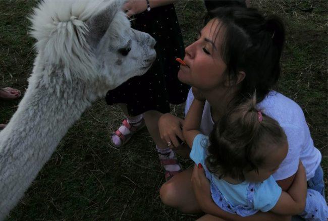 Podróże dziecka – piknik z Alpakami